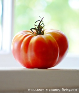 Tomato-on-Windowsill