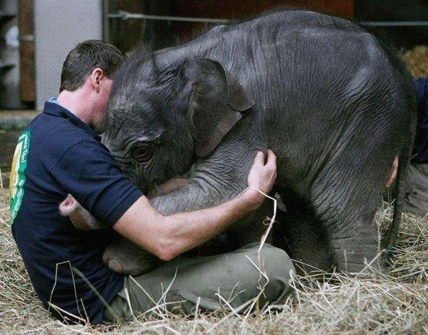 scared-little-baby-elephant