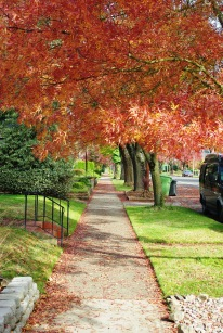 Sidewalk_in_autumn_-_Salem,_Oregon